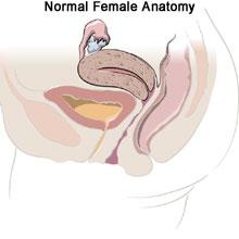 endometriosis-normal-en,uterine prolapse treatment